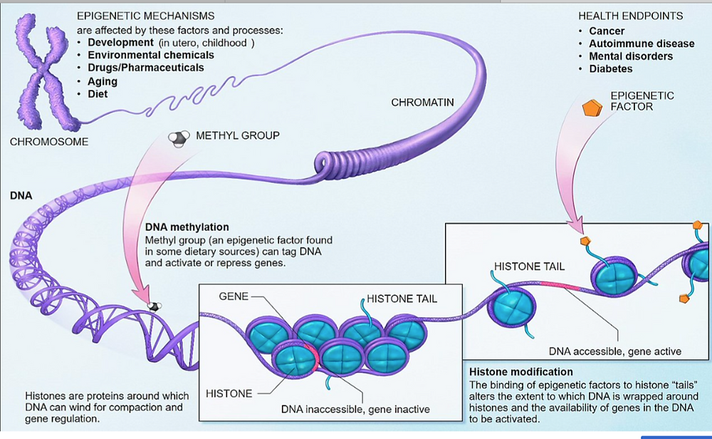 gene methylation, gene suppression, epigenetics, multiple sclerosis