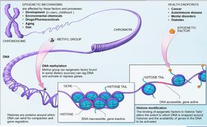 gene methylation, gene suppression, epigenetics, multiple sclerosis