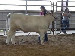 Courtney with her show heifer