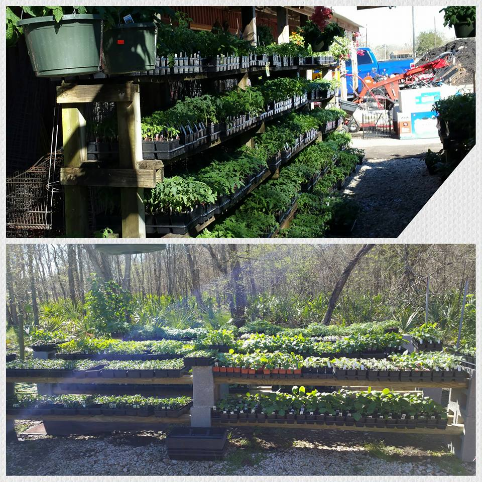 A look at our garden center