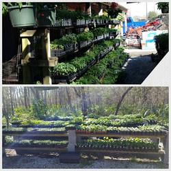 A look at our garden center