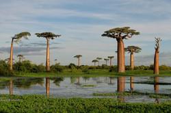Por que Baobá?