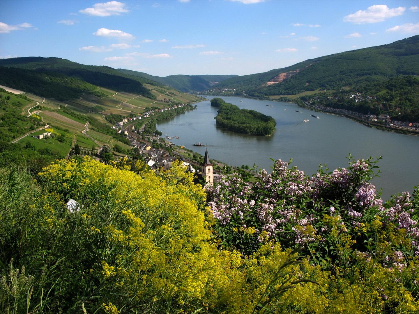 Rheingau_Lorch_am_Rhein_2009