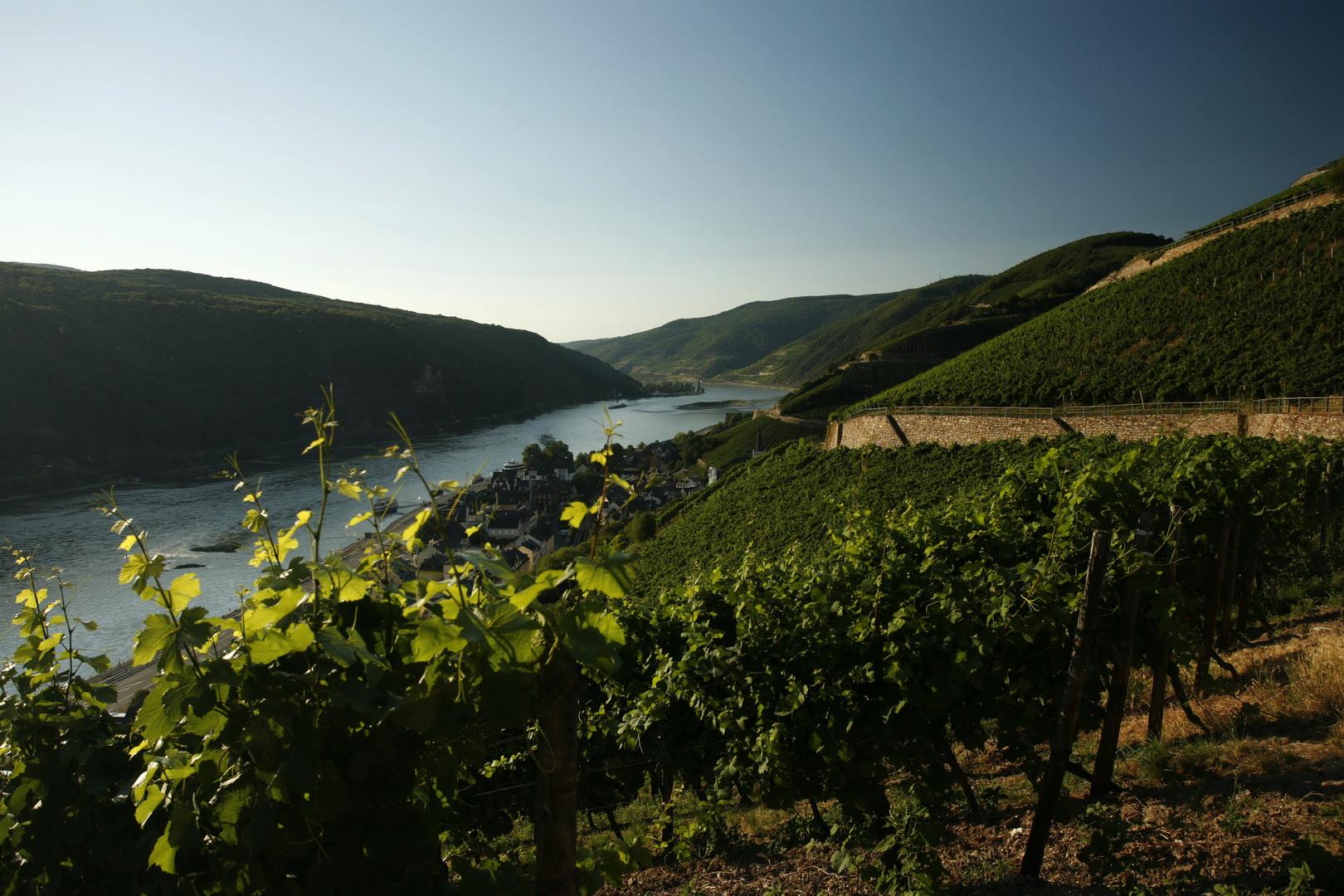 Rheingau_Oberes_Mittelrheintal_Rheingau