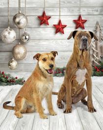 Bella and Max Christmas.jpg