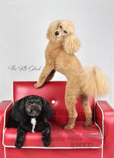 Charlie and Benji1.jpg