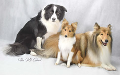 Millie Lassie Pearl2.jpg