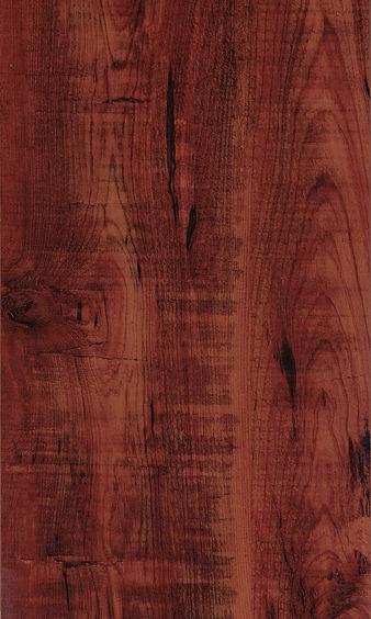 Ancient Cypress.jpg