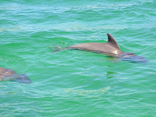 Best Boat Tour of Destin: Parasailing Dolphin Tour!