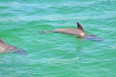 Dolphins Destin FL Catamaran Tours