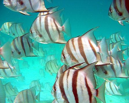 Snorkeling fish Mirmar Beach Destin Florida Fun Things To Do Kids