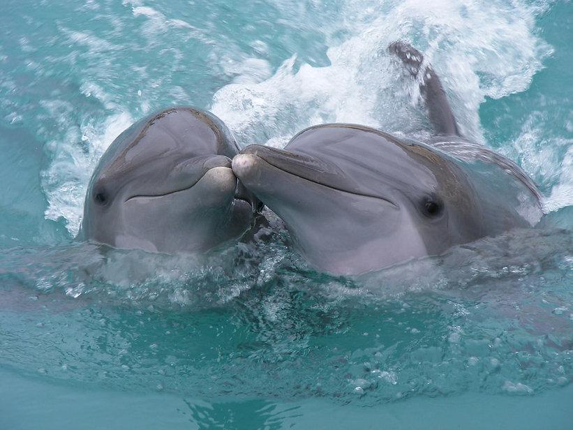 Things to do in Destin - Dolphin Tour - Kid Friendly