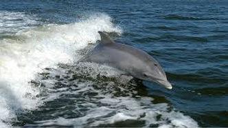 Dolphin Tour Destin, FL