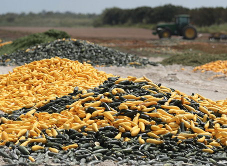 Corona's Crippling Blow; Food Waste - And How One Start-Up Intends to Stop It