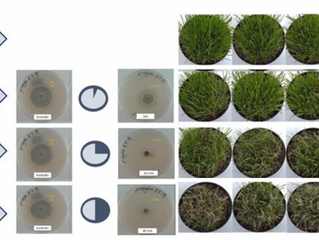 UV-C turfgrass disease control - The Evidence
