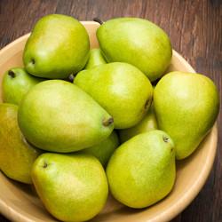 dAnjou-Pears-12-count