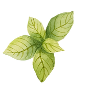 folhas de menta