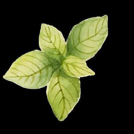 foglie di menta