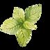 hojas de menta