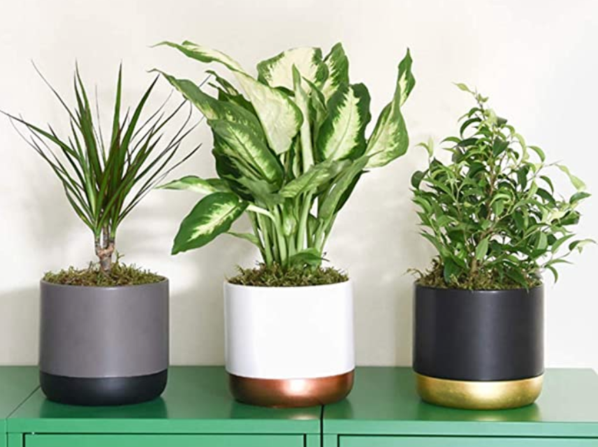 Working from home desk plants