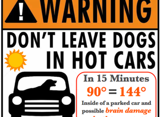 Don't leave your pet in the car !