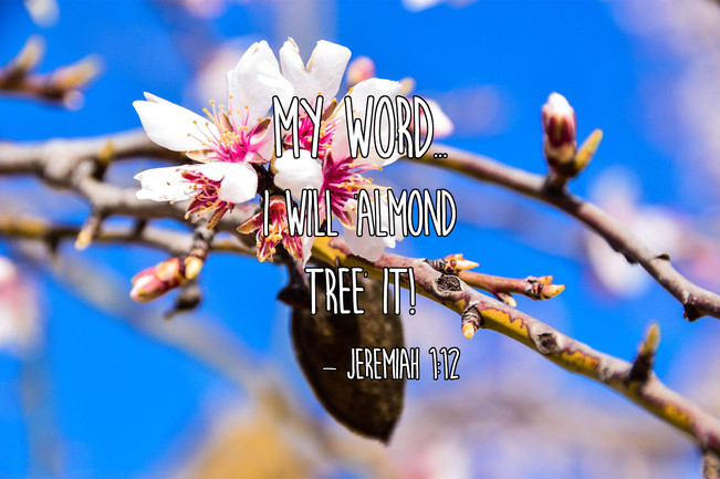 "I will ""Almond Tree"" it!"