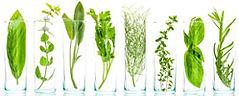 craft-batch-botanicals-web-7.jpg