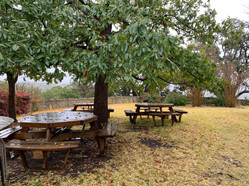 picnic tables.jpg