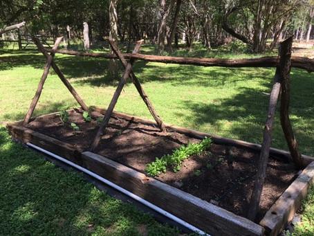 From the Soil of a Non-Gardener