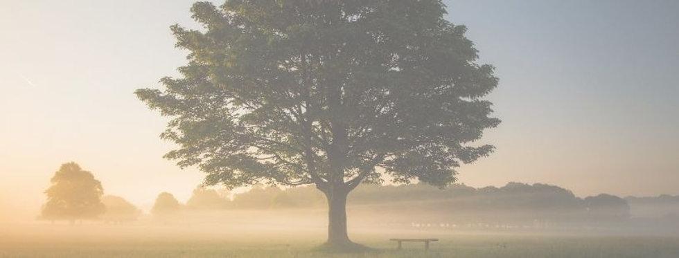 Lone Oak  banner.jpg