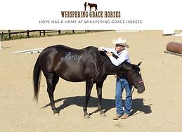 WHISPERING GRACE HORSES.png