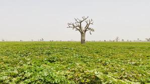 AFRICA: OPPORTUNITÀ PER IL MONDO INTERO