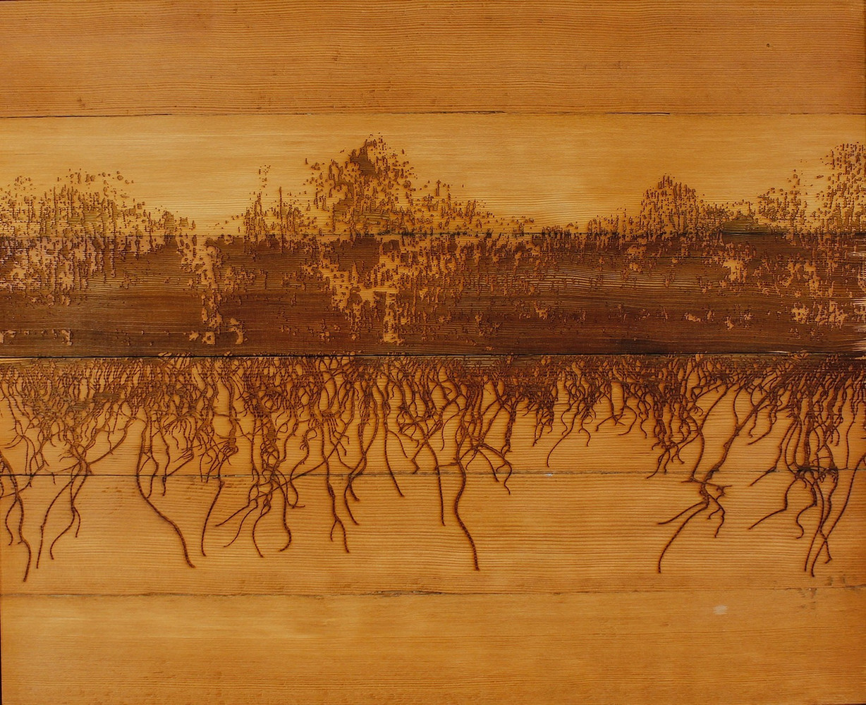 burn (old growth), laser engraved drawing on fir, 19.5 x 24 inches