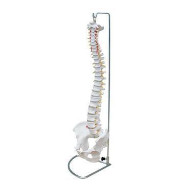 Lifesize Flexible Vertabrae Column