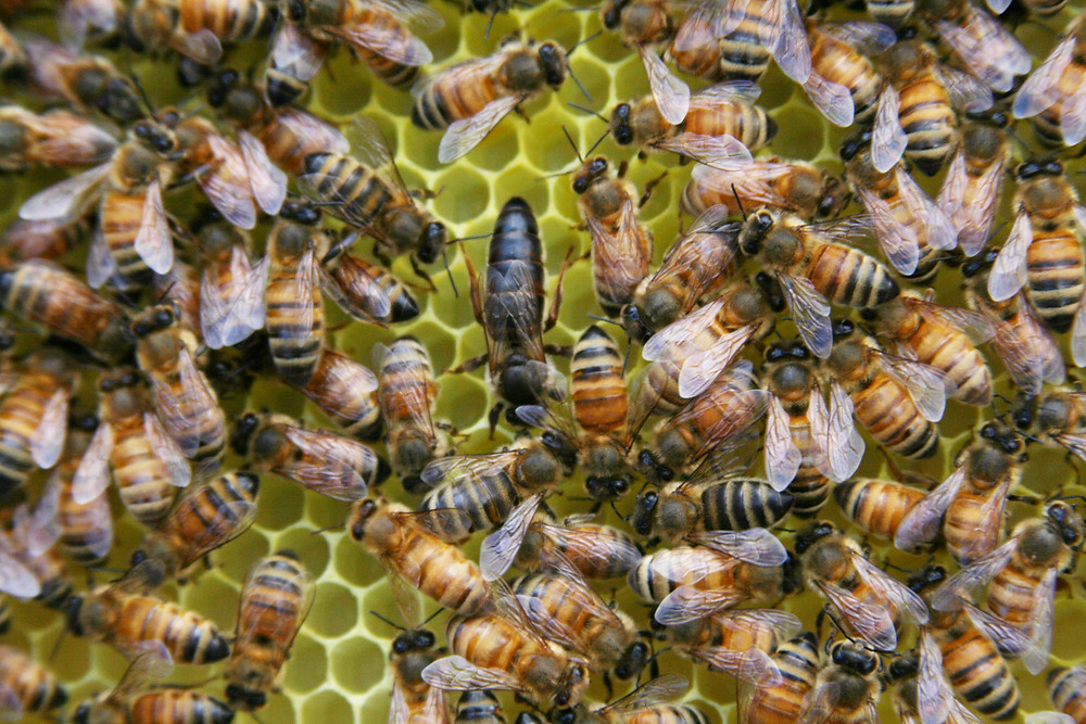 Bees on a beehive