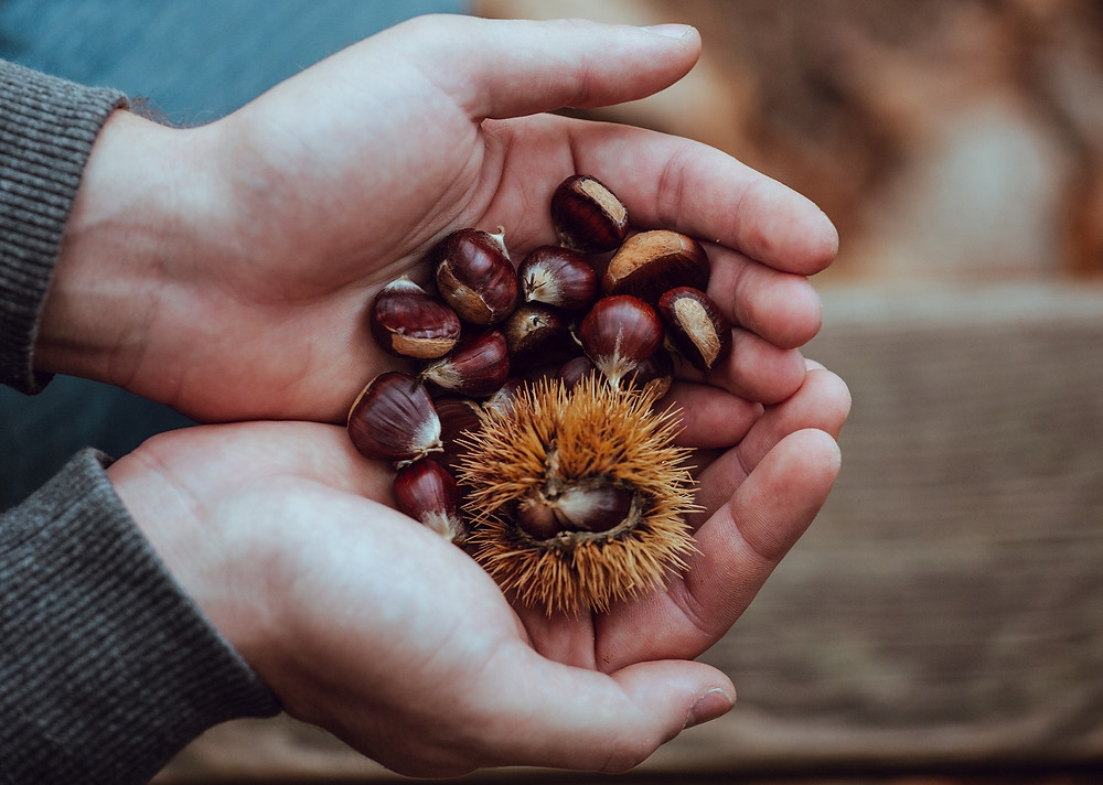 Chestnuts held in hands with open palms