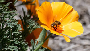Popular with the Pollinators