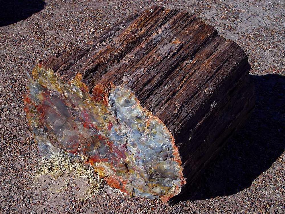 A small chunk of petrified wood