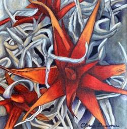 red aloe aglow  6.15.21