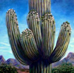 Saguaro Buds Abound