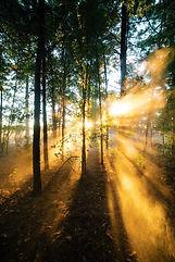 lightthrutrees.jpg