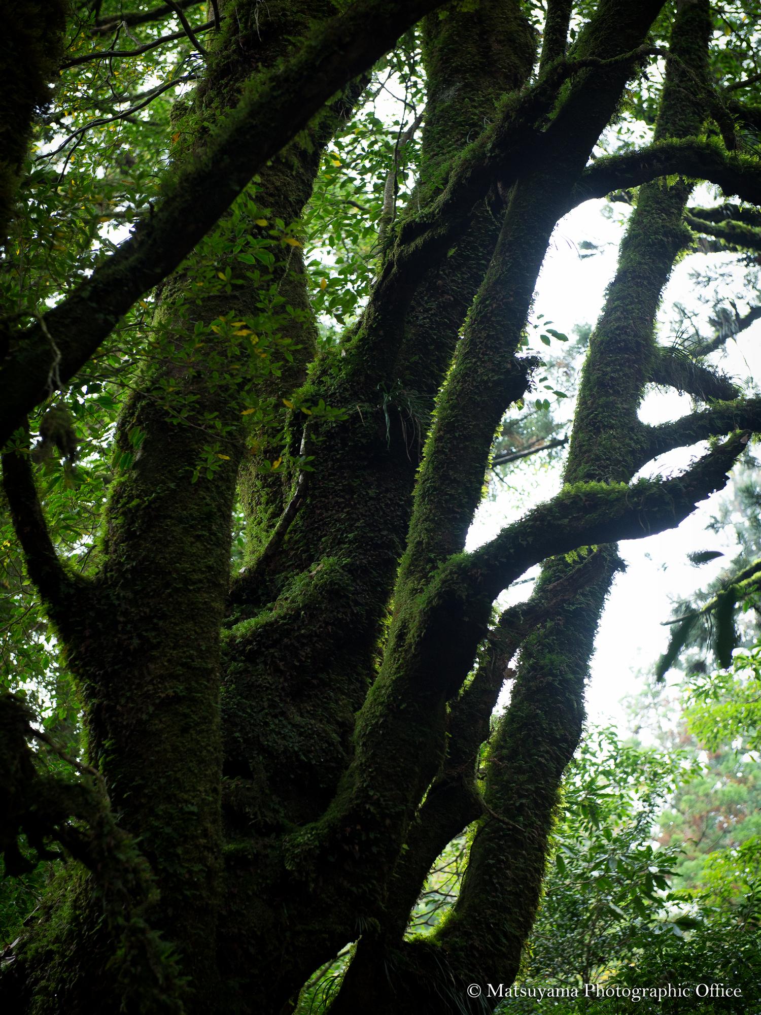 Yakushima.Forest_3774