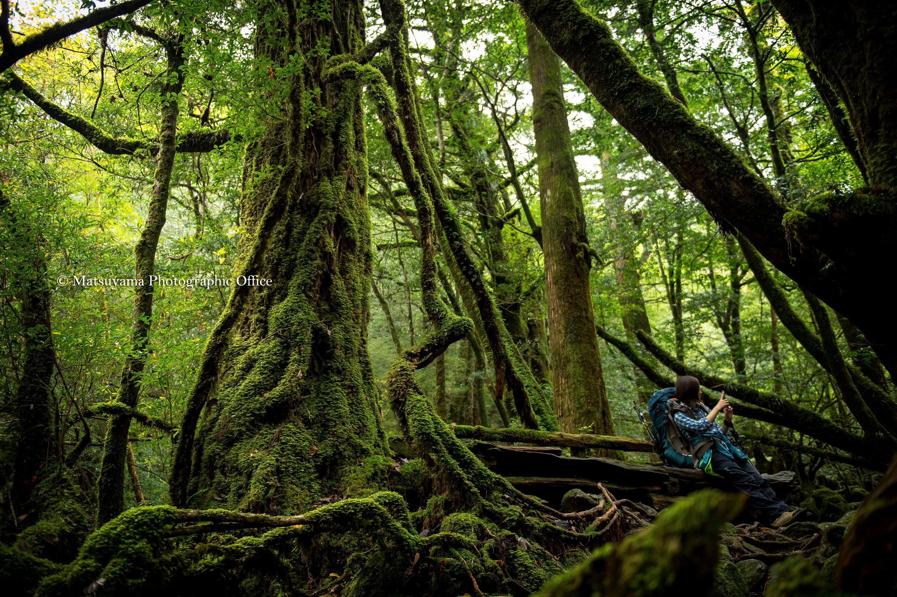Yakushima.Forest_3524(C)