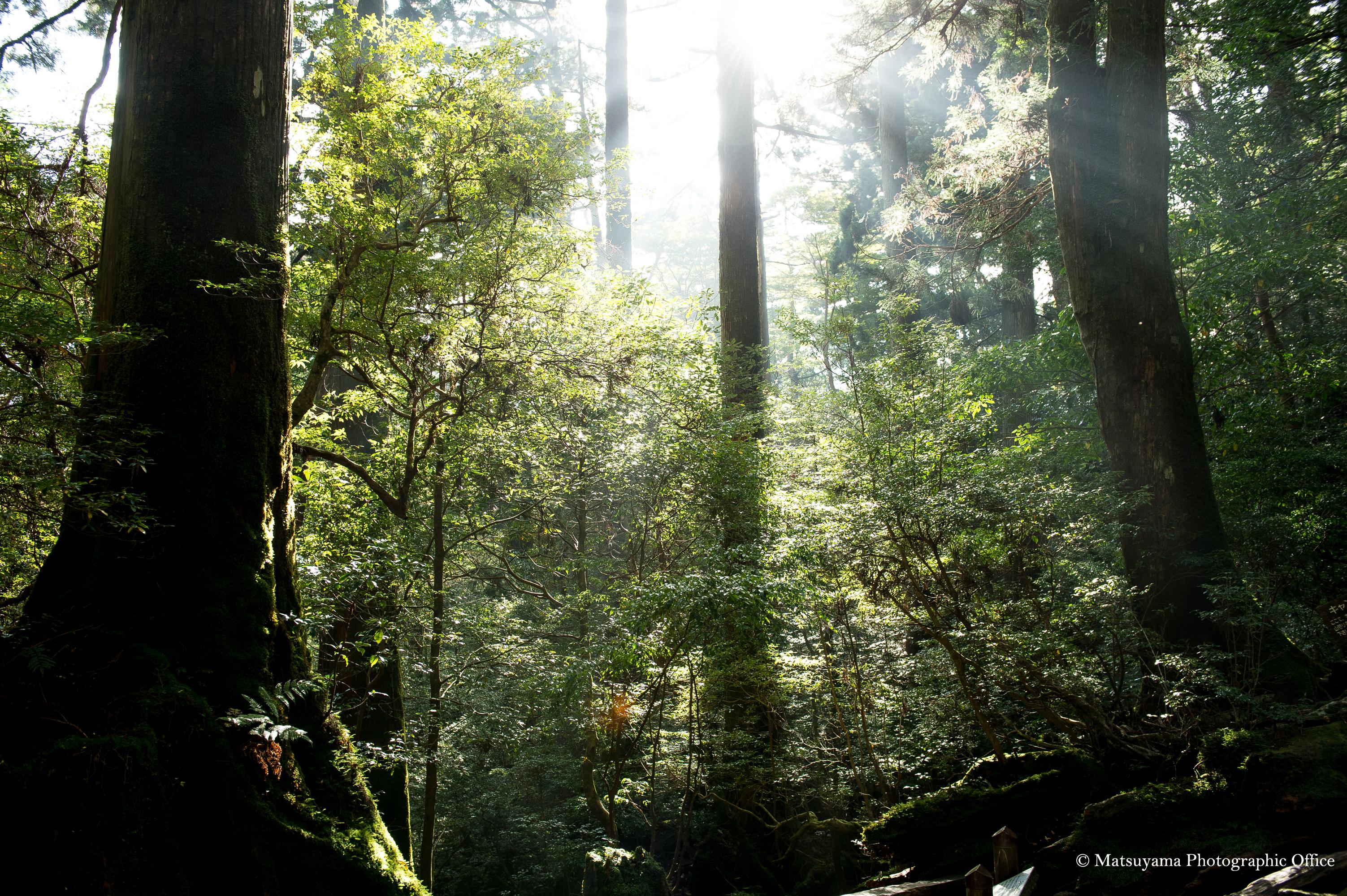 Yakushima.Forest_4102