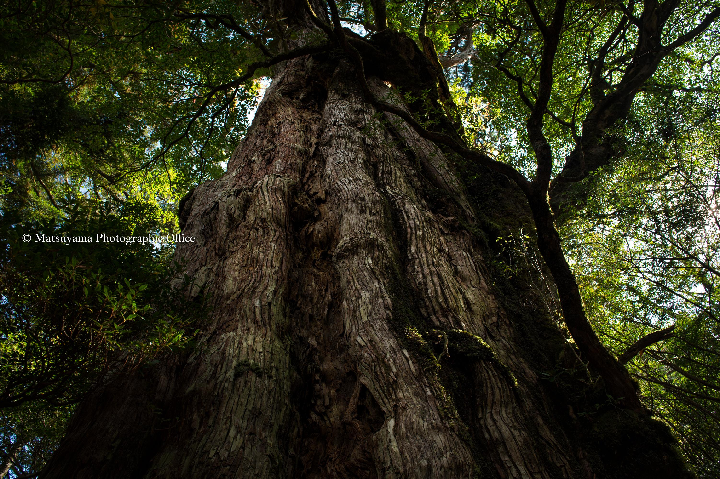 Yakushima.Forest_5772