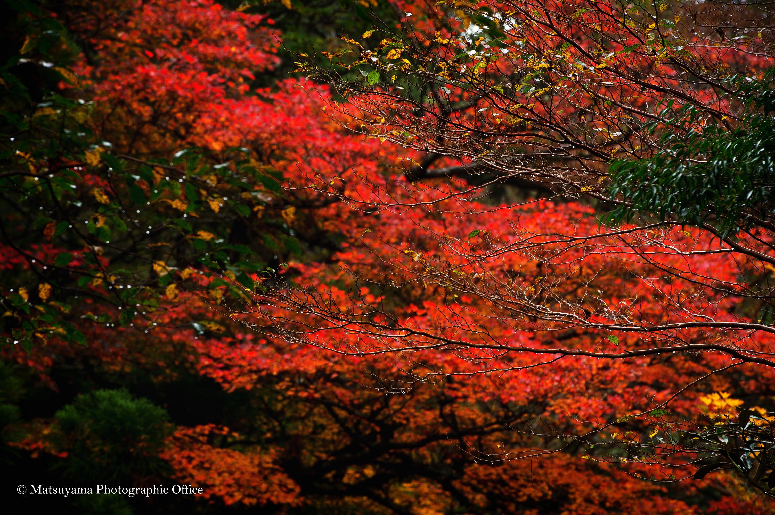 Yakushima.Forest_6364