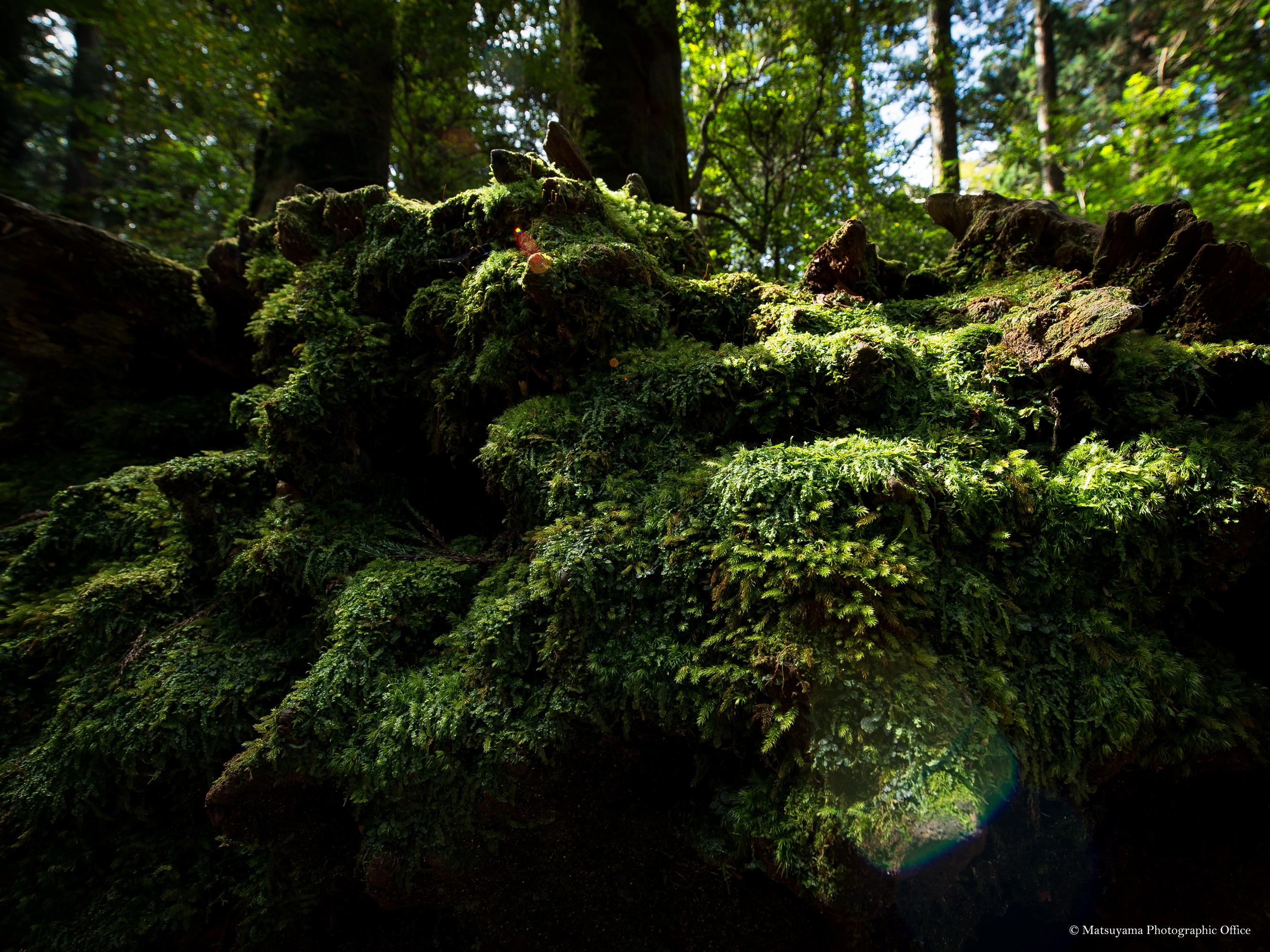 Yakushima.Forest_5116