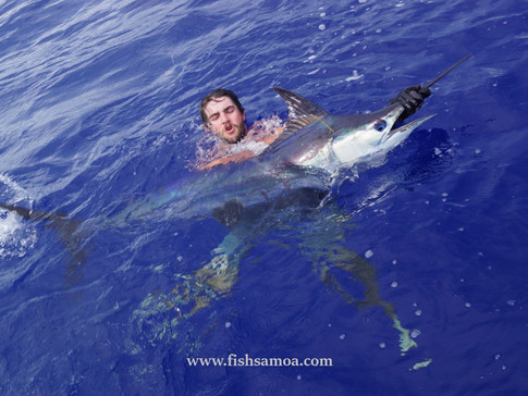 Marlin Released Under Water