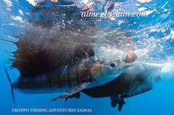 Als sailfish from water et