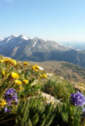 trailside wildflowers on Mt. Elbert